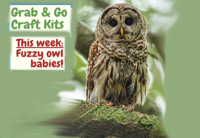 craft kit owls